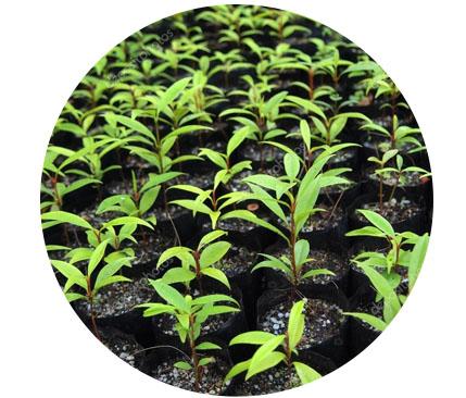 multiplasticos-bolsa-semillero-vivero-sector-agricola